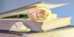 Bledá růže
